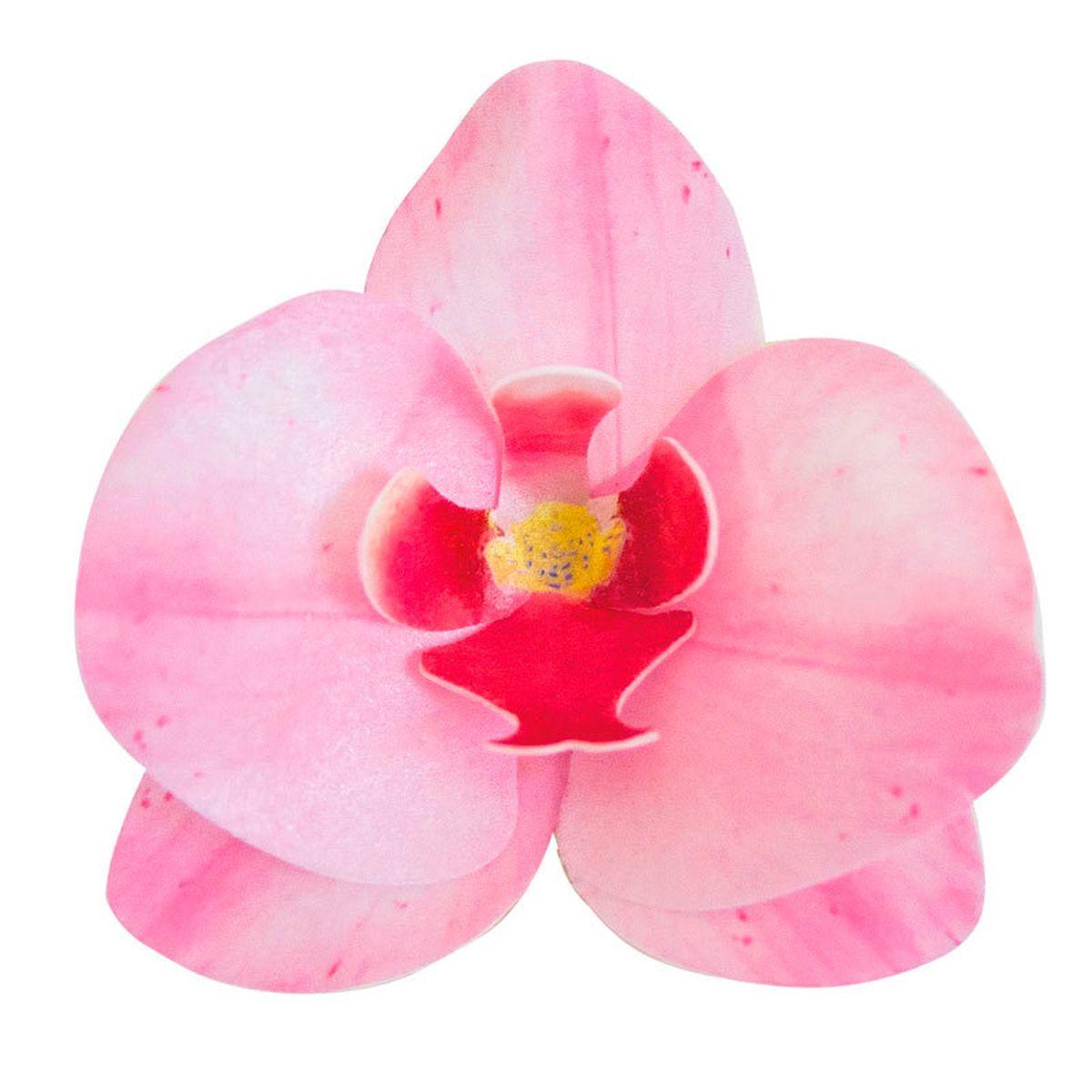 10 orchidées en azyme rose 8.5 x 7.5 cm - Dekora